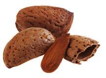 Almond nut Stock Photos