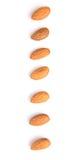Almond Nut IV Stock Photography