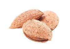Almond nut Royalty Free Stock Photo