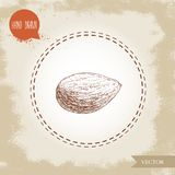 Almond nut seed sketch. Vector hand drawn illustration. Organic superfood component. Highly detailed. Isolated on old looking background Royalty Free Stock Photo
