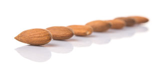 Almond Nut VI Stock Image