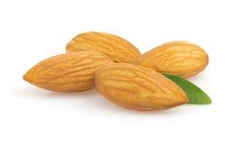 Almond nut on white Stock Image