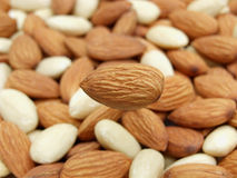 Almond nuts stock image