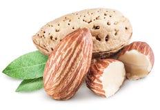 Almond nuts. Royalty Free Stock Photos