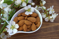 Almond. Nuts and flowers. Stock Images