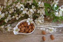 Almond. Nuts and flowers. Stock Photo