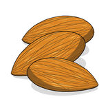 Almond nuts illustration. Isolated almond nuts illustration; Tree nuts drawing Stock Photo