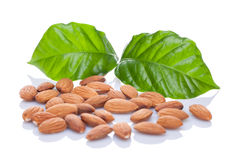 Almond nuts with leaves. Isolated on a white background. Clipping path royalty free stock images