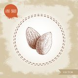 Almond nuts seed group sketch. Vector hand drawn illustration. Organic superfood. Highly detailed. Stock Image