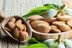 Almond nuts in wooden shovel, almonds with shell in bamboo bowl. On wooden background with green fresh raw almonds on almond tree branch royalty free stock images