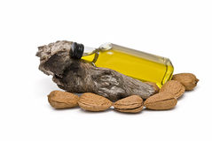 Almond oil bottle on a branch. Stock Image