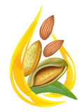 Almond oil. Stylized drop. Illustration on white background Stock Photo