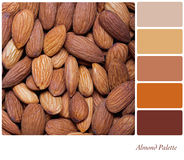 Almond palette royalty free stock photography