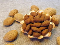 Almond royalty free stock photography