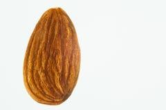 Almond seed Prunus dulcis isolated Stock Photos