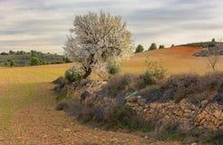 Almond Sentinel stock photo