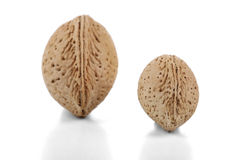 Almond in Shell Stock Photos
