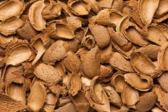 Almond shells in the background. Empty shell almonds as a background for the entire frame Royalty Free Stock Images