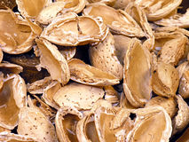 Almond Shells Closeup Royalty Free Stock Photo