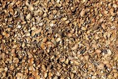 Almond shells texture in Teruel Albarracin Royalty Free Stock Photos