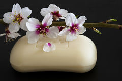 Almond Soap Stock Images