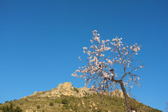Almond tree. Flowering almond tree amidst mountain landscape Stock Images