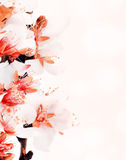 Almond tree blossom Stock Photo
