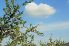 Almond tree with clouds stock image