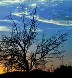 Almond tree on colorful sky at dawn Stock Photography