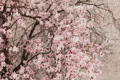 Almond tree full of flowers close up Stock Image