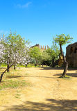 Almond tree and Temple of Juno Stock Photos