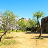 Almond tree and Temple of Juno Royalty Free Stock Photo