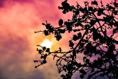 An almond tree white blooms, the sunset shot. royalty free stock photo