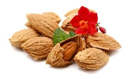 Almond. Two almond nuts composition  on white background Stock Image