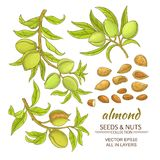 Almond vector set. Almond branches vector set on white background Stock Photo