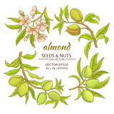 Almond vector set. Almond branches vector set on white background Stock Photos