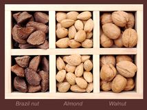 Almond, Walnut, and Brazil nut Royalty Free Stock Images