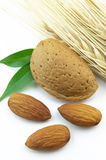 Almond with wheat Stock Photography