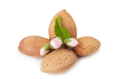 Almond Whith Flower Stock Images