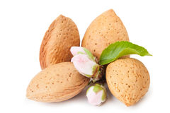Almond Whith Flower Royalty Free Stock Images