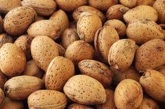 Almonds. Closeup of fresh almonds (In Shell Stock Photos