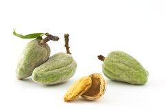Almonds. Fresh almonds on the branch, and almond nut Royalty Free Stock Image