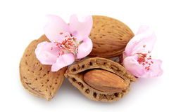 Almonds and almonds flowers Stock Image