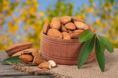 Almonds in a bowl on the old wooden board with sackcloth and blurred garden background Stock Photography