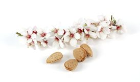 Almonds and branch Royalty Free Stock Photos