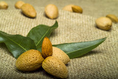 Almonds on brown natural sheet. Almonds with leaves on brown natural sheet stock photography