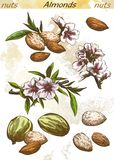 Almonds color Stock Image