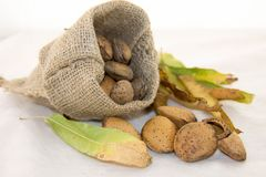 Almonds and dry leaves in a rustic bag on a white background. Autumn is here. Dry leaves and ripe fruits are coming. Almonds and dry leaves in a rustic bag on a Royalty Free Stock Photography