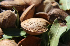Almonds. Drying in the sun after harvest Royalty Free Stock Photo