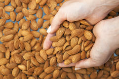Almonds' fall Stock Image